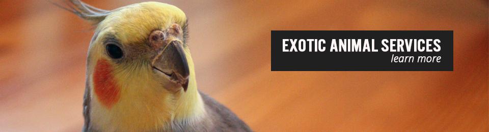 Exotic Animal Slide
