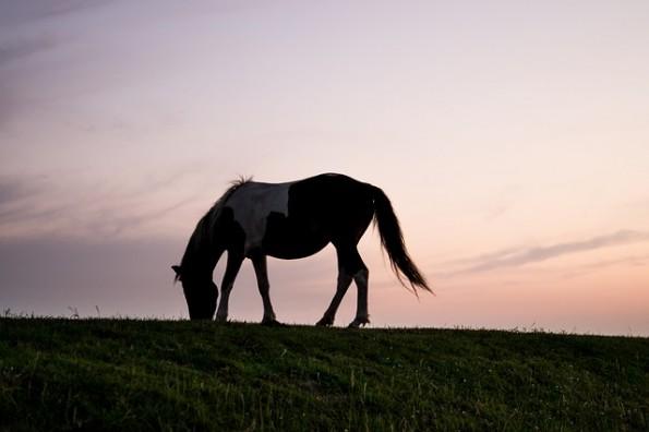 horse-996616_640
