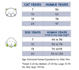 dogs-cats-in-human-years