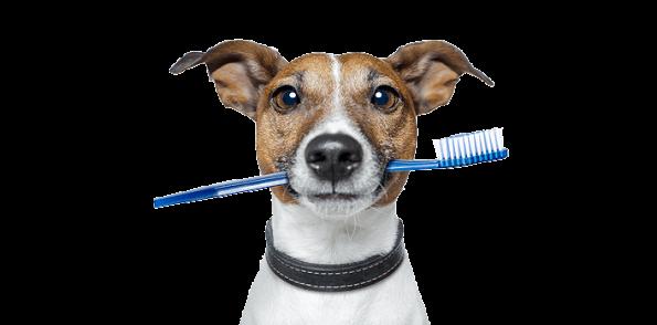 Dog-tooth-brush-827bb59f95bd89fe35fb51551ae59a78