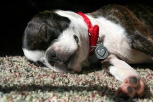 Maggie puppy