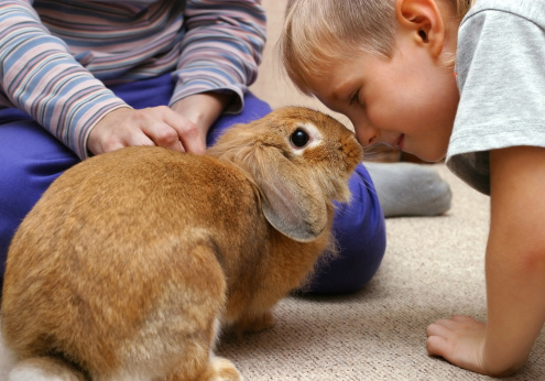rabbit_digging_in_carpet