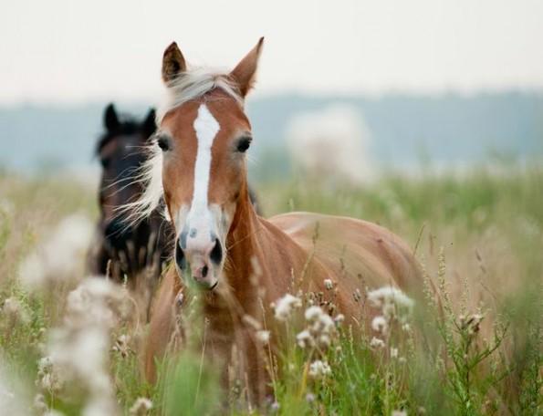 horses-ears.jpg.638x0_q80_crop-smart